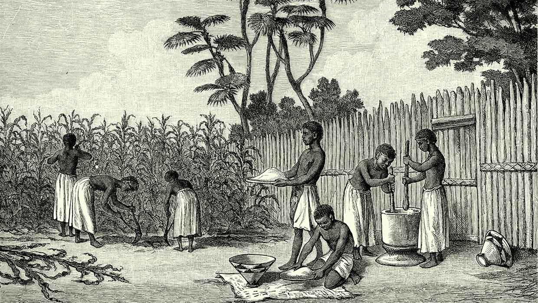 Maisernte in Angola, Afrika. Bildertafel, Ferdinand Hirt, 1886. Foto: istockphoto