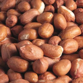 Erdnüsse-Jumbo roh ungeschält 25kg
